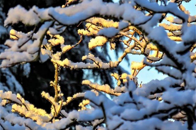 11 февраля в регионе ожидается переменная облачность и небольшой снег.