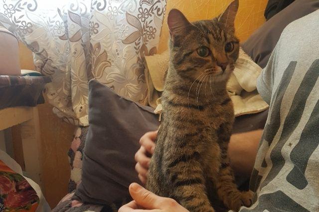 После освобождения из «ловушки» кота вымыли и накормили.