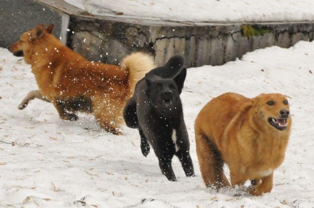 Часто безнадзорные животные ведут себя очень агрессивно по отношению к людям.