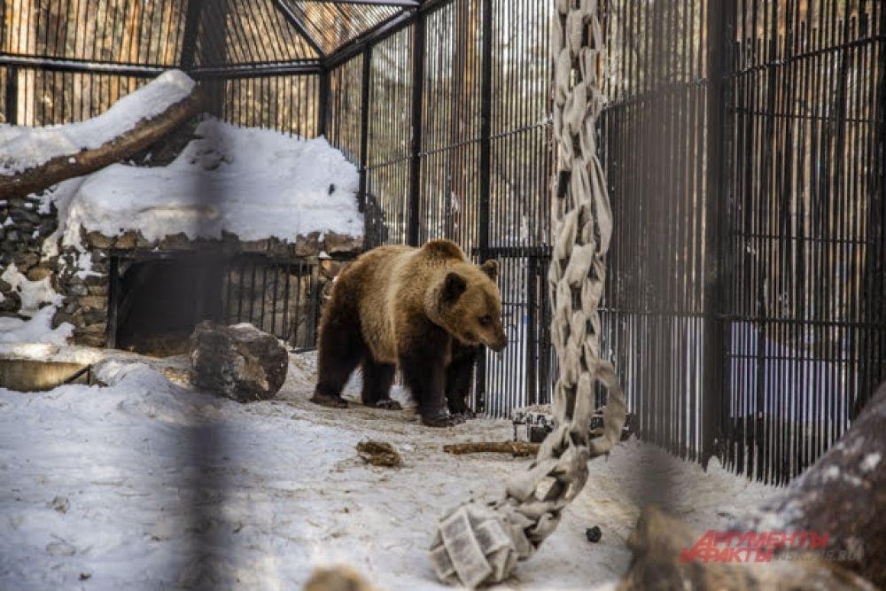 Для бурого медведя привычны погодные условия тундры.