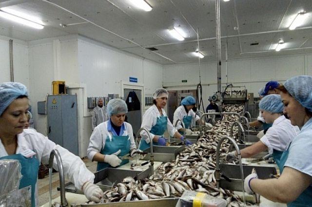 На Ямале продолжается добыча рыбы