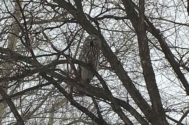 Волноваться стоит в том случае, если птица сидит не на дереве, а под ним, не может взлететь и с трудом двигается. В этом случае птица, скорее всего, больна либо у неё сломано крыло. Её стоит отнести к ветеринару.