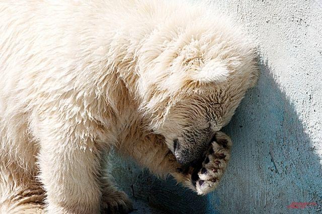 Сайты содержали предложения о приобретении за установленную плату приспособлений (электроудочек) для добычи рыбы с помощью воздействия электрического тока, а также информацию об охоте на белого медведя и сайгака, процессе ловли и способах уничтожения животных
