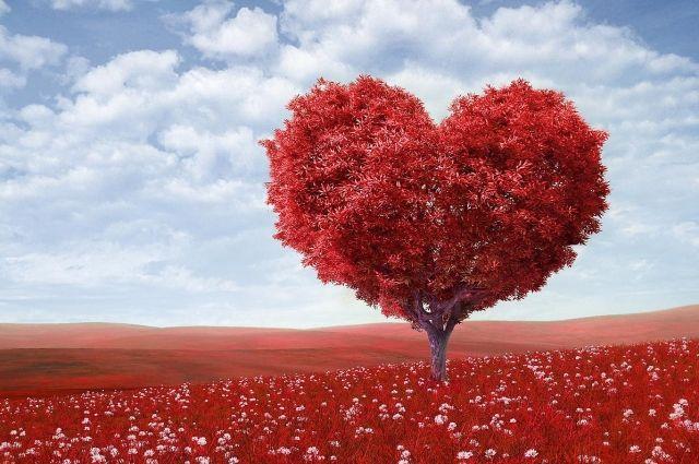 Ишемия, инфаркты и холестерин: главные мифы о здоровье сердца