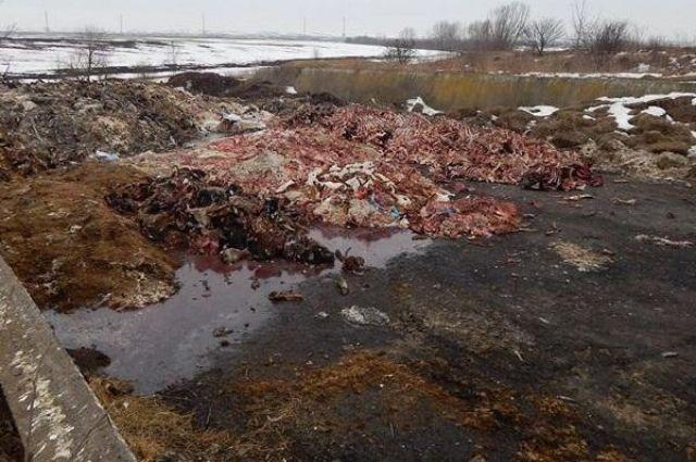 Под Тернополем предприятию грозит закрытие за стихийный скотомогильник