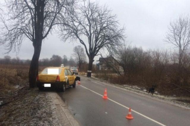 Водитель Renault получил травмы, въехав в дерево