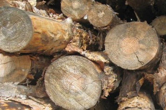 На продажу выставляют лес, полученный в ходе санитарных рубок