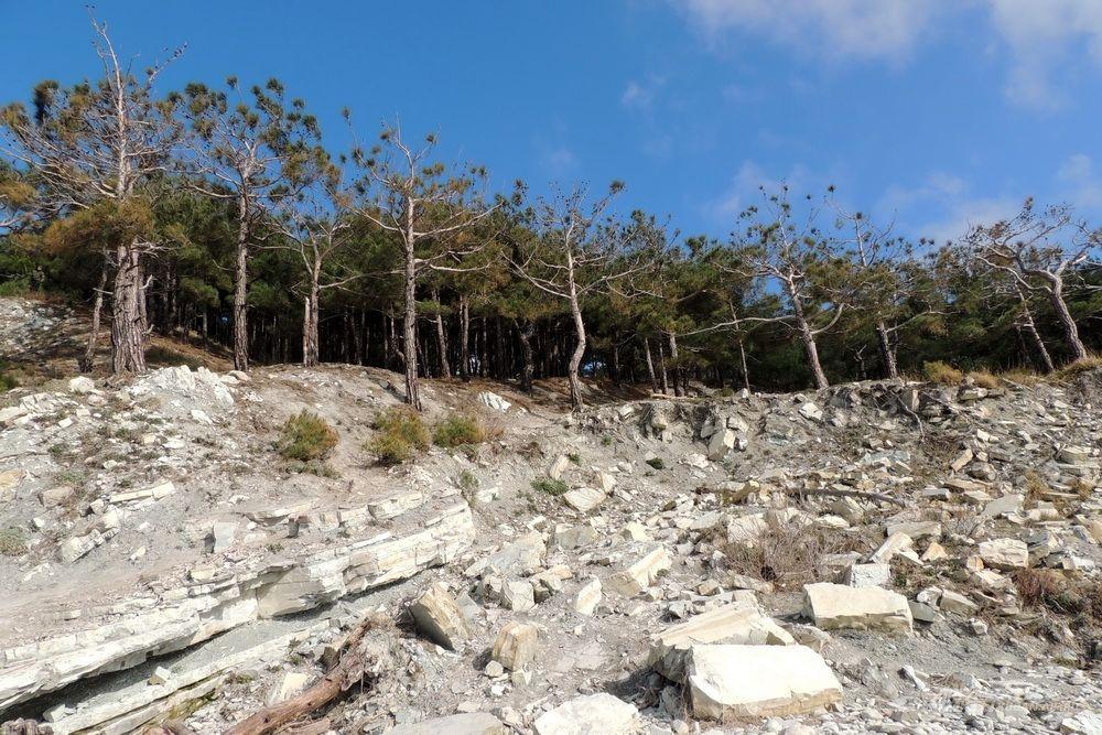 Судно выбросило на берег в живописном уголке Черноморского побережья.