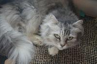 Хозяева черного кота Люцика (Люцифера) нашли ему в это день подружку – забрали кошку Люциллу.