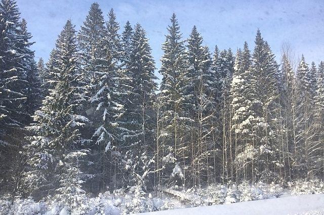 Мужчины уехали в лес на снегоходах и заблудились.