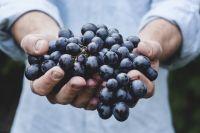 В последние несколько лет Министерство сельского хозяйства выделяет дотации на закладку новых виноградников в южных регионах России.