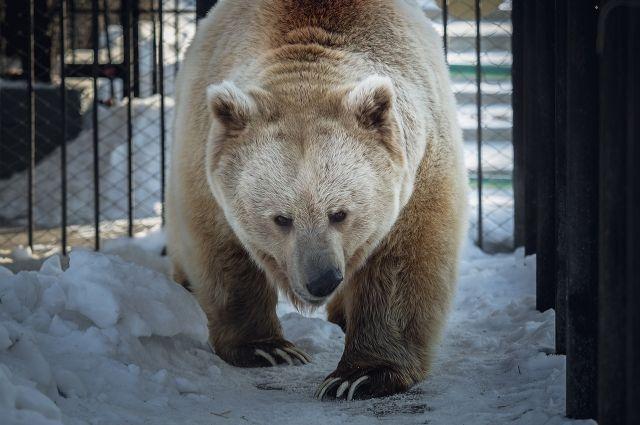 Медведь проснулся раньше обычного.