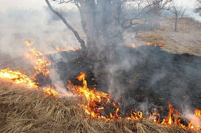 В Калининградской области зафиксированы первые палы травы