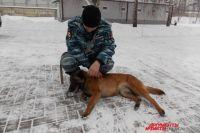 По факту жестокого обращения с животным полиция провела служебную проверку.