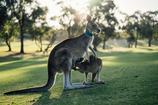 В Австралии высадят 1 млрд деревьев для борьбы с парниковыми газами