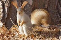 У самки через 38-40 дней после спаривания может появиться от 3 до 10 детенышей