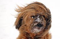 МЧС: в Оренбуржье усилится ветер до 16-21 м/с