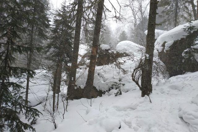 Тюменец закопал приятеля в лесу