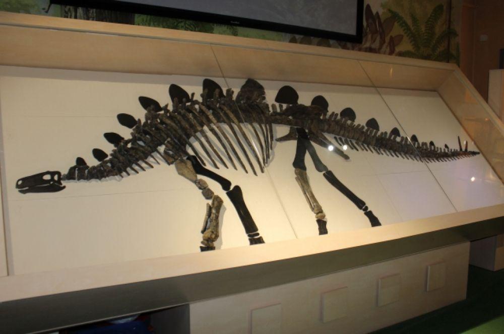 Единственный в России скелет стегозавра.