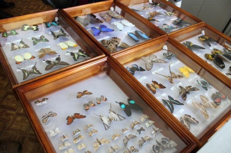 Коллекция тропических бабочек в естественнонаучном отделе.