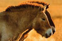 Заповедники Оренбуржья стали в 10 раз популярнее у туристов