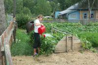 Дачные участки переименовали в садовые и огородные