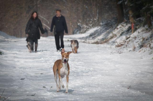 Тюменская семья приютила собаку, которую ранили лопатой в Метелево