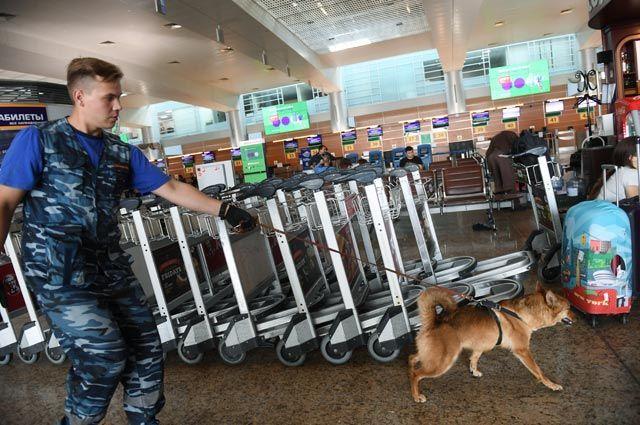 Сотрудник кинологической службы авиакомпании «Аэрофлот» вовремя работы сослужебной собакой втерминале международного аэропорта «Шереметьево».