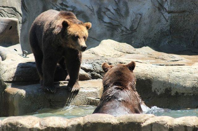 Медведи почуяли весну.