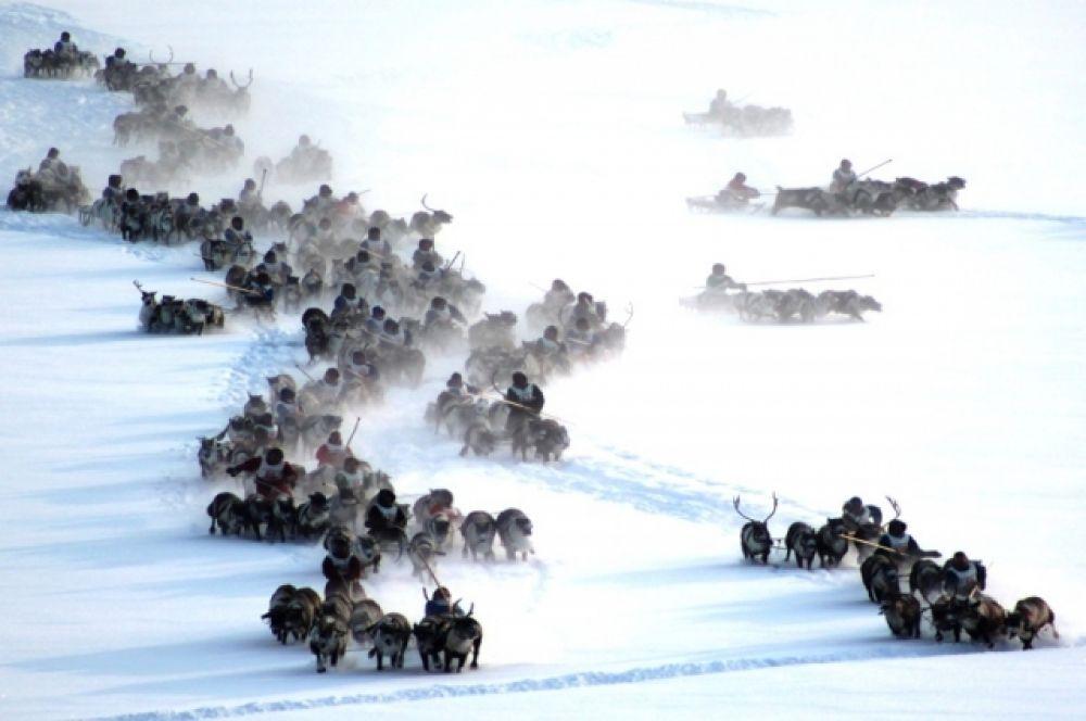 Второй день праздника посвятили гонкам на оленьих упряжках, в общей сложности было проведено порядка 150 одиночных заездов.