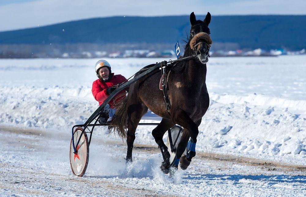 В соревнованиях участвуют конники из разных районов области и из соседней Башкирии.
