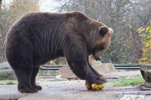 3 марта в Калининградском зоопарке пройдёт «Прогулка с директором»