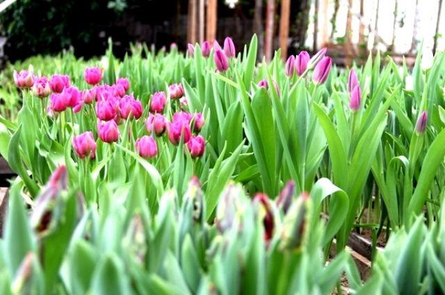 Цветы выросли чуть раньше ожидаемого.