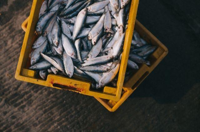 Полтонны опасной рыбной продукции изъято.