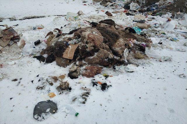 Опасную свалку нашли в Исетском районе