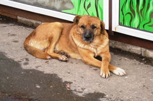 Администрация Яр-Сале выплатит компенсацию, покусанному собакой ребенку