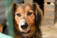 Волонтеры написали открытое письмо губернатору Бергу из-за отравлений собак