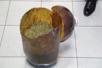 В Бузулуке местный житель вырастил коноплю во вдоре своего дома.