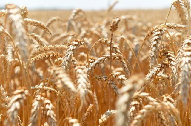 В 2018 году 99,7% тюменских полей засеяли кондиционными семенами