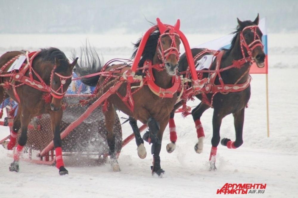 Конный спорт в Иркутске активно развивается, пользуясь популярностью у иркутян, и получает поддержку от муниципальных властей.