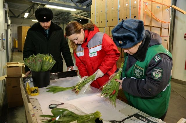 В Калининград привезли свыше 500 тонн цветов