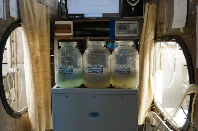 Самым лучшим вариантом оказалась смесь урины человека, перекиси водорода и бытовых отходов
