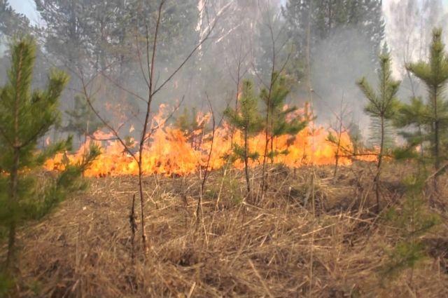 Тушить лесные пожары в Хабаровском крае будет амфибия Бе-200ЧС.