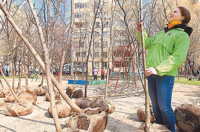 Родителям новорождённых москвичей предложат посадить деревья.