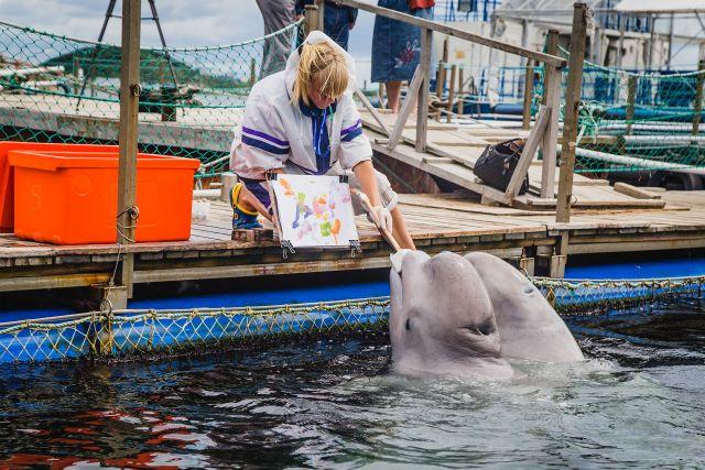 Белухи из Приморского океанариума могут рисовать картинки для детей.