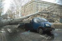 В Николаеве на дорогу упал большой тополь и раздавил ехавший микроавтобус