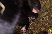 Медвежата в Барнаульском зоопарке