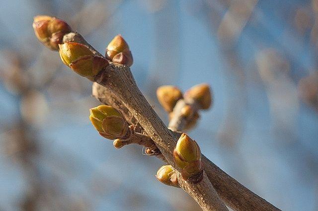 По климатической норме весна в регионе наступит в конце марта.