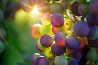 Стали известны марки лучших ликерных вин России