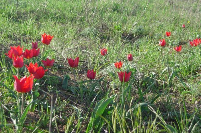 Омич заказал 2000 тюльпанов к 8 марта по интернету и прогорел